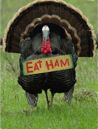 Turkey_EatHam