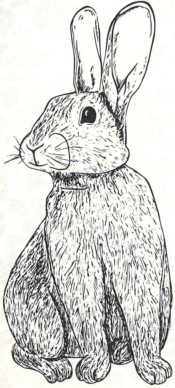 EasterBunny-1
